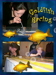 Gold Fish Racing